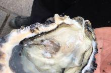 法国马赛旧港鱼市场,吃生蚝好过做神仙