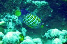 MANA岛海域拍摄的各类鱼