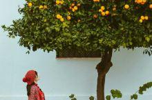 在西班牙龙达找到一颗橘子树。