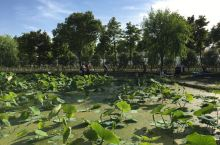 联怡枇杷园
