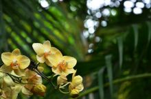 兴隆热带植物园游记