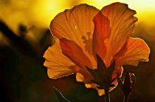 卡伦湖畔的花儿