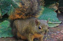 活泼可爱的小松鼠