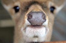 🦌鹿境——垦丁的小奈良