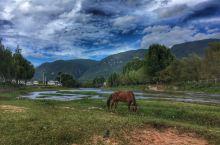茶马古镇的马