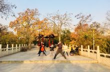 紫荆山公园:紫荆山公园位于郑州市区东北,是商代旧城遗址的一部分。整个公园被金水河、道路自然分隔为东园