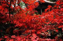 深秋時節的上海新天地