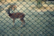 Deer Park Delhi India 🇮🇳