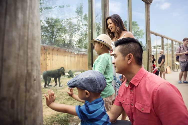 Calgary Zoo2