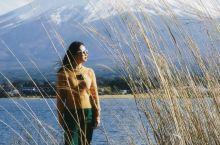 富士山秘境:河口湖,樱花,富士山绝佳位置