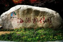 青岛海泊风情园