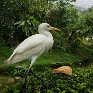 Mini Zoo Taman Teruntum旅游景点攻略图