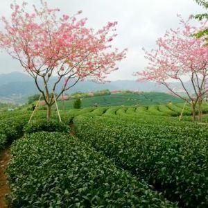 永福樱花园旅游景点攻略图