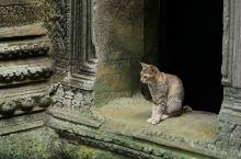 在路上 在柬埔寨偶遇小猫