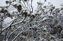 你哪里下雪了吗?
