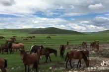 7月草原与马群