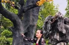 我找到那棵神树啦!给神树挠痒痒~
