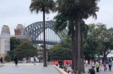 悉尼环形码头也被蓝花楹点缀