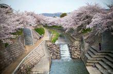 佐保川是奈良市内屈指可数的赏樱胜地
