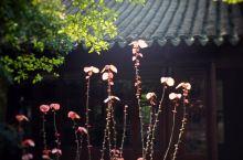 周庄春天的花草