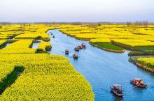 #元旦去哪玩#最美的油菜花田之一,种在千百个岛上游客坐船游览