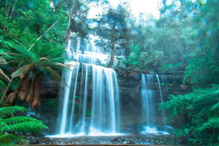 Mount Field National Park2