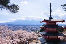 花见绝景 | 富士山赏樱No.1机位——新仓山浅间神社