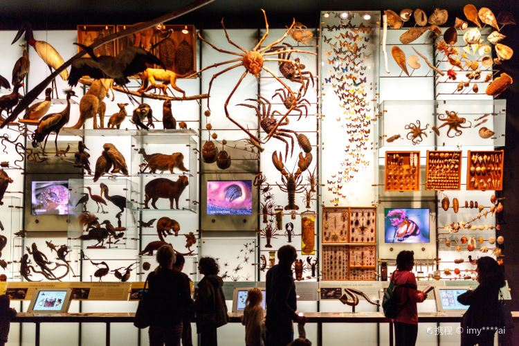 미국 자연사 박물관2