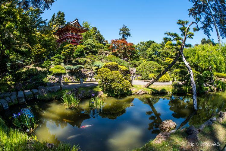 Japanese Tea Garden4