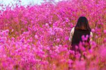 岫岩映山红景区