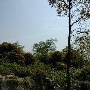 昂坪高原旅游景点攻略图