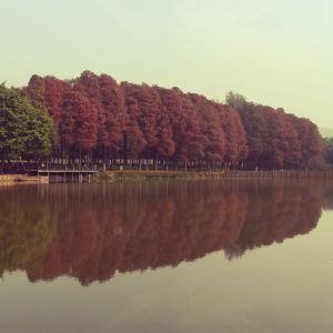 麓湖公园旅游景点攻略图