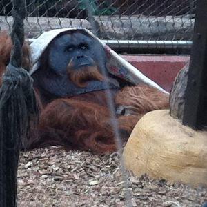 多特蒙德动物园旅游景点攻略图