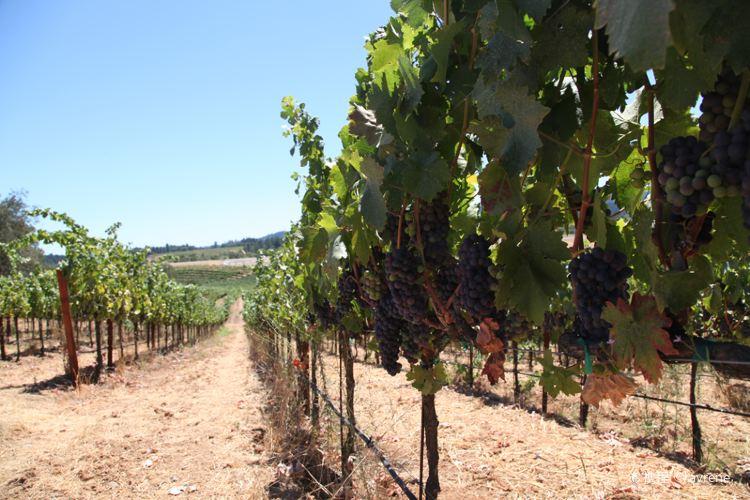 Mazzocco Winery