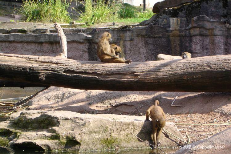 Nuremberg Zoo (Tiergarten)1