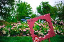 花星球在这里爱花看花