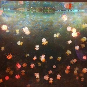 嘉兴海底世界旅游景点攻略图