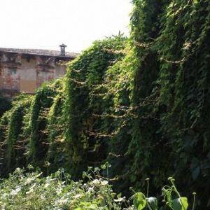 朱斯蒂花园旅游景点攻略图