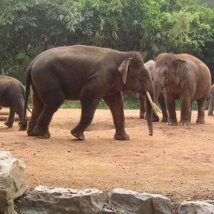 动物园旅游景点攻略图