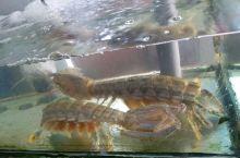 手掌大的皮皮虾