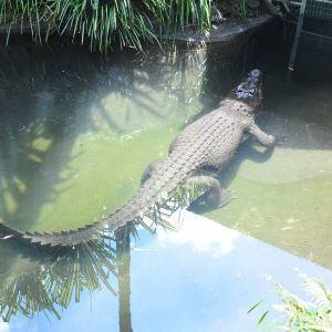 凯恩斯室内穹顶野生动物园旅游景点攻略图