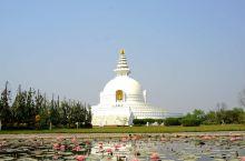 世界和平塔(World Peace Pagoda)。蓝毗尼园还保存有释迦牟尼佛真身舍利,佛祖的这些舍
