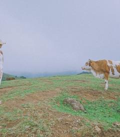 [郴州游记图片] 郴州 念念不忘,遠方的云雾与丹霞