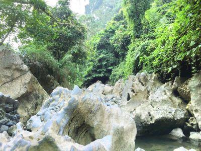 Huayudong National Forest Park