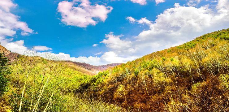 바이차오와 국립삼림공원