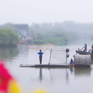 苏州游记图文-解锁沙家浜隐秘玩法:捕鱼打菜籽漫游花海,芦苇荡中享船宴