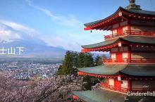 富士浅间神社偶遇樱花雪
