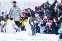 旭山动物园的企鹅们