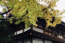爱在深秋 - 増上寺