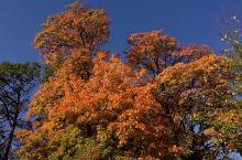 🇳🇱色彩的狂欢-荷兰的金秋